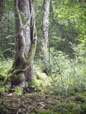 Lierre autour d 39 un arbre for Bordure autour d un arbre