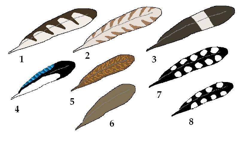 reconnaitre les plumes d 39 oiseau. Black Bedroom Furniture Sets. Home Design Ideas